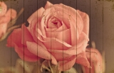 Картины на досках Цветы