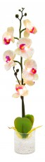 Растение в горшке Орхидея PL307 06261