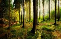 Картины на досках Природа МФ10115