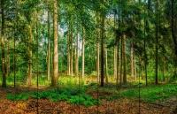 Картины на досках Природа МФ10131