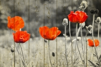Картины на досках Цветы МФ10150
