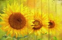 Картины на досках Цветы МФ10155