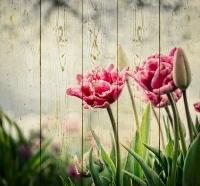 Картины на досках Цветы МФ10157