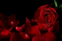 Картины на досках Цветы МФ10158