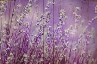 Картины на досках Цветы МФ10162
