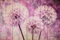 Картины на досках Цветы МФ10163