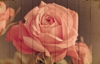 Картины на досках Цветы МФ10164
