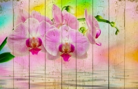 Картины на досках Цветы МФ10166