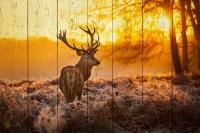 Картины на досках Животные МФ10231