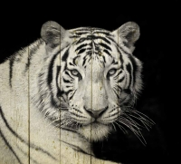 Картины на досках Животные МФ10236
