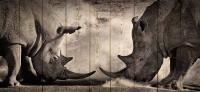 Картины на досках Животные МФ10238