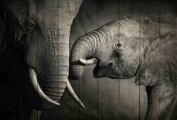 Картины на досках Животные МФ10258