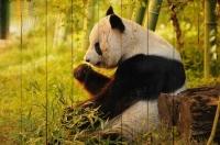 Картины на досках Животные МФ10260