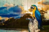 Картины на досках Животные МФ10261