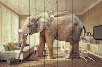 Картины на досках Животные МФ10268