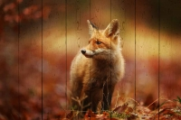 Картины на досках Животные МФ10271