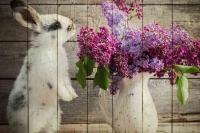Картины на досках Животные МФ10285