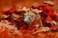Картины на досках Животные МФ10296