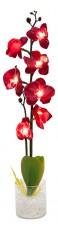 Растение в горшке Орхидея PL307 06260