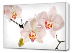 Настенные часы (60х37 см) Орхидеи BL-2204
